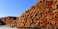 Przemysł drzewny